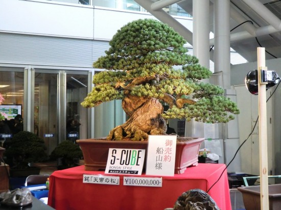 Most-Expensive-Bonsai-550x412-1